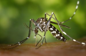Protecting the Tribes from the Zika Virus